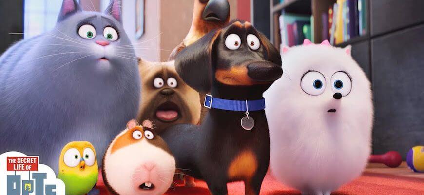 Evcil Hayvanların Gizli Yaşamı Filmi Fundalina